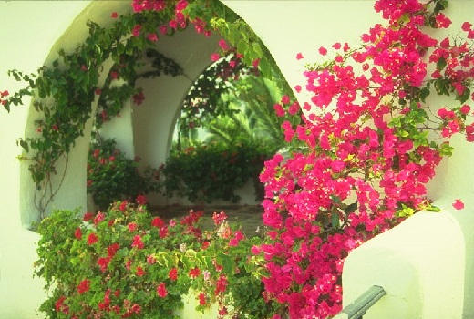 balkon_letom_rozovaya_kompoziciya