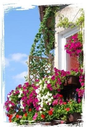 rozovaya_kompoziciya_na_balkone
