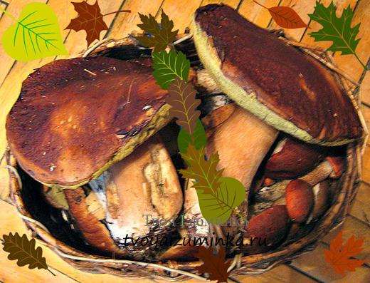 Польза грибов для человека.