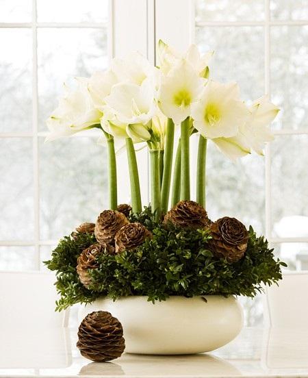 Шишки в цветочных горшках
