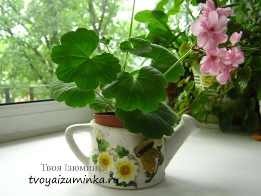 Какие дома полезно держать цветы