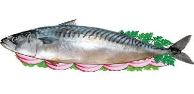 Какая рыба самая полезная. Скумбрия.