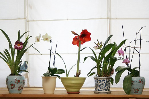 Цветы на окне в ванной комнате.
