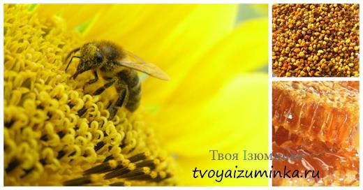 Как себе помочь при стенокардии, лечение народными средствами. Лечение продуктами пчеловодства.