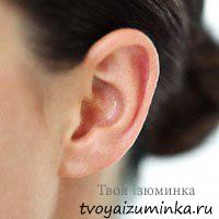 Как определить характер по ушам