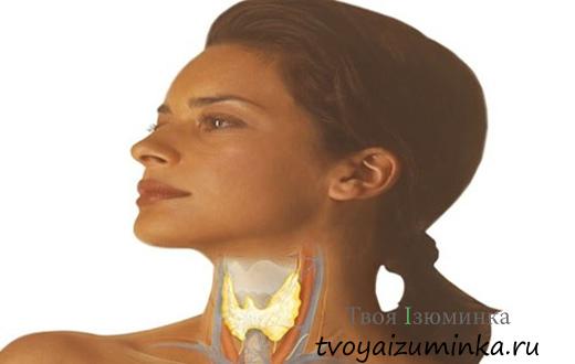 Признаки нарушений в работе щитовидной железы. Профилактика йододефицита.