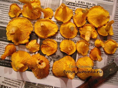 Очищенные грибы лисички