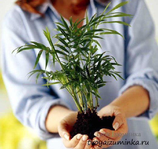 Как правильно пересадить комнатные цветы