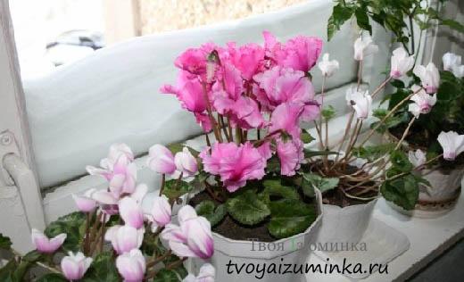 Как приготовить подкормку для комнатных цветов
