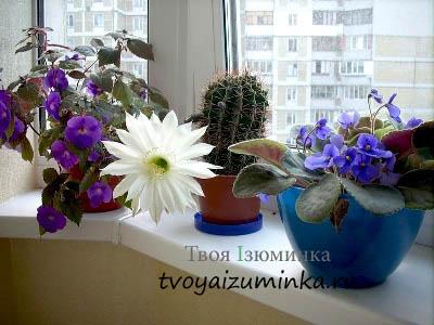 Освещение цветов зимой