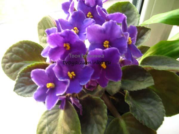Простые и доступные средства от вредителей домашних цветов